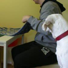 Therapiehund bei der ARbeit