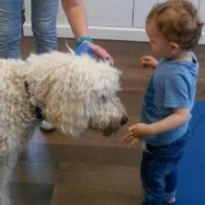 Leon mit Therapiehund