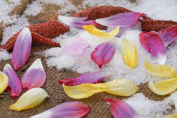 Blütenblätter auf Schnee