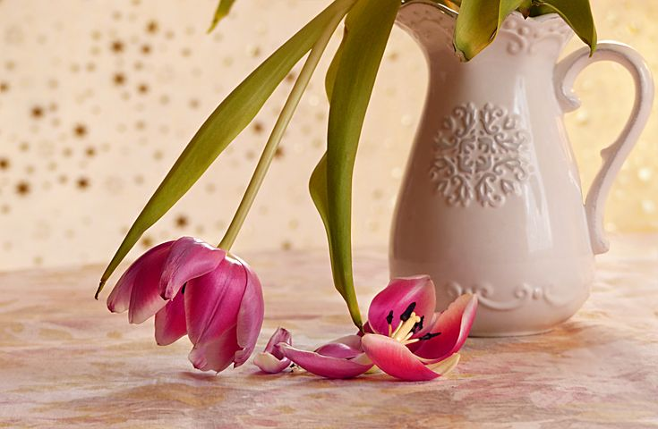 verblühte Tulpen