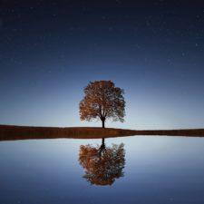 sich spiegelnder Baum