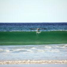 Welle mit Möwen