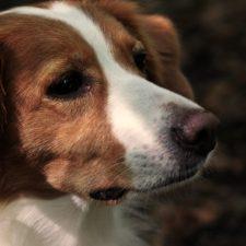 Foto von Hund