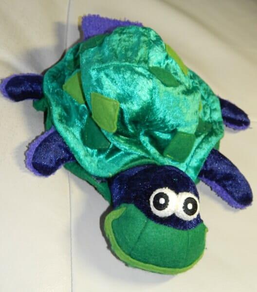 Bild von Turtle